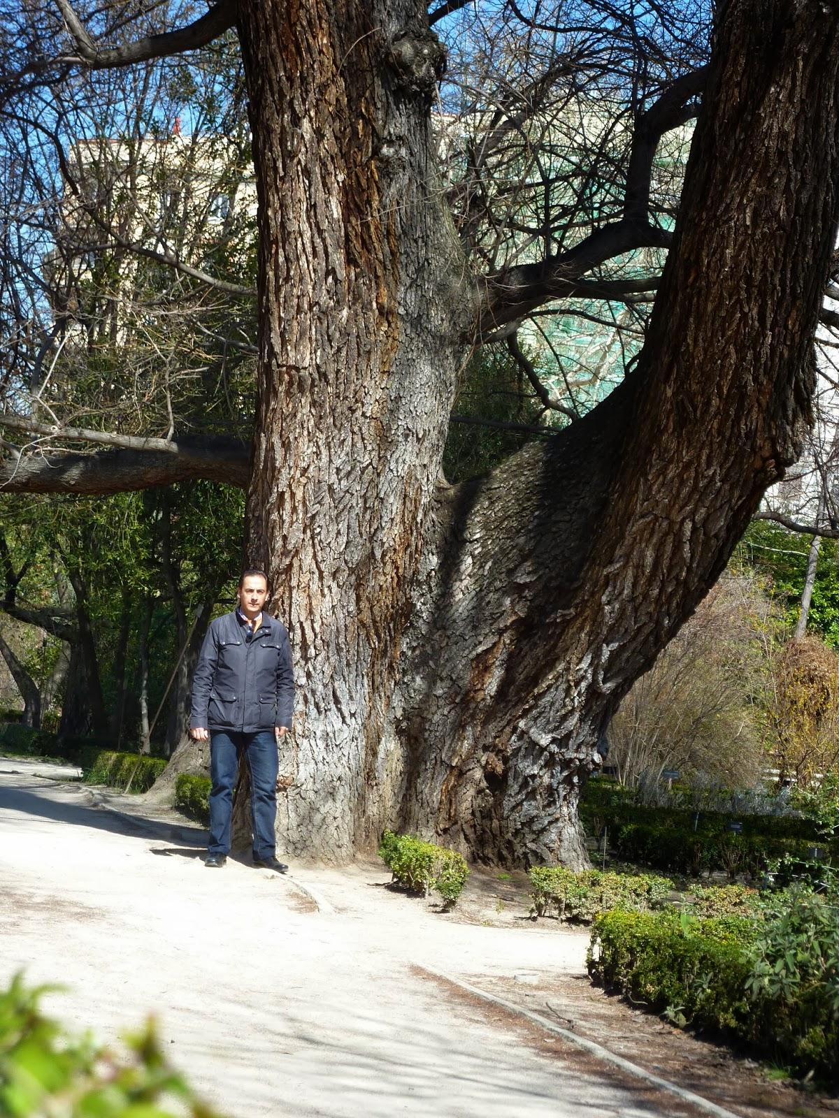 Rboles equilibrio de la vida olmo el pantalones jard n for Arboles jardin botanico