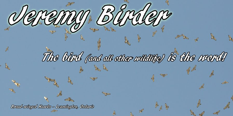 Jeremy Birder - The Bird Is The Word!
