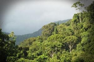 Wild Life in Rain Forest , wild animals, wild life