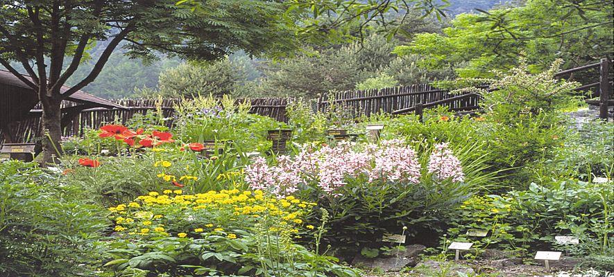 Piante e fiori le piante annuali da esterno for Piante annuali