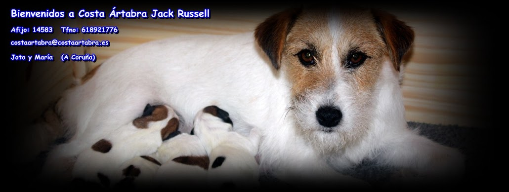 Cachorros Jack Russell Terrier Costa Artabra en Galicia