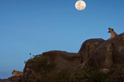 Leo, Full Moon, Tahnee Fournier, Prairie Yogi