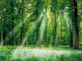 The Garden of Eden: The Origins of Satan's Seed - Forrest with Sunlight Shining Through