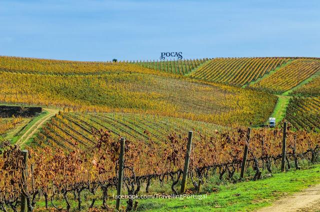 vinhas douro
