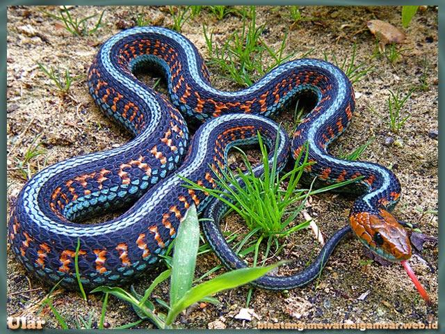 gambar binatang reptil ular