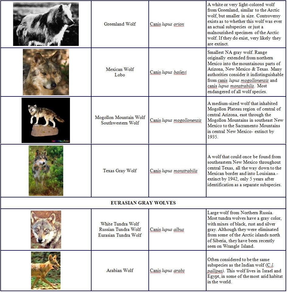 Species and Subspecies Sp004
