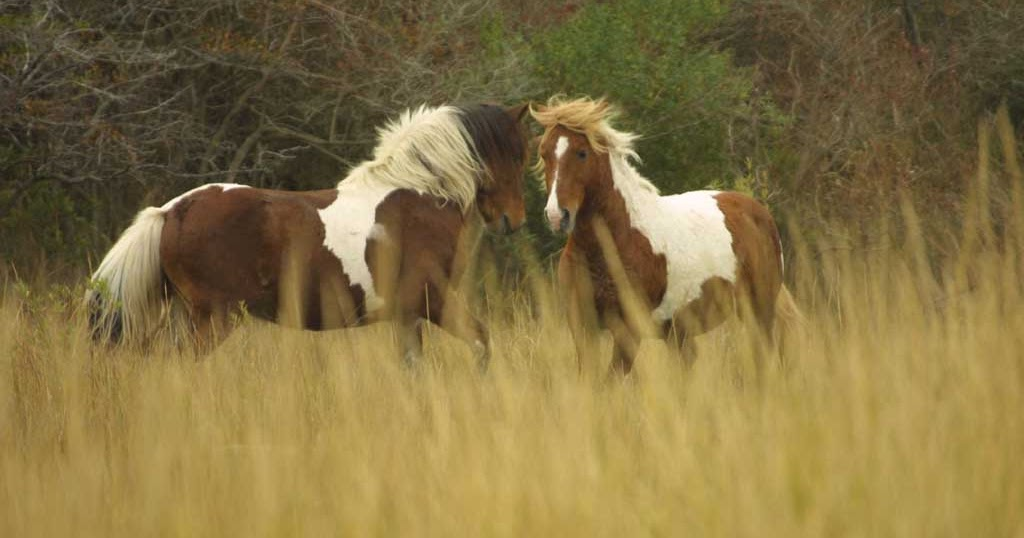 Beautiful Wild & Pets Animals: Wild Horses Grouped HD ...