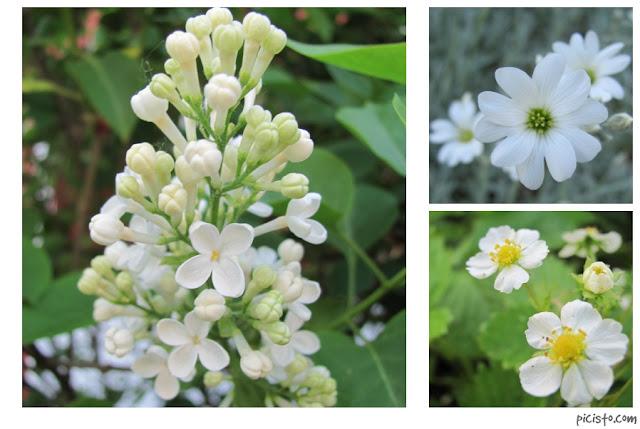 haaste: kolme kukkakuvaa 2. päivä
