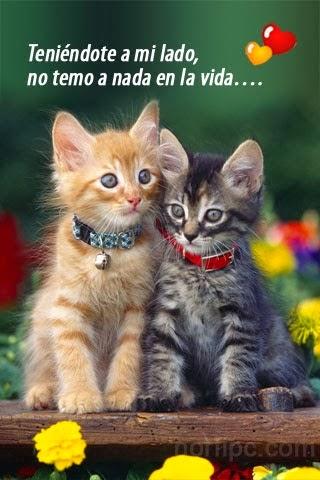 imagenes+cursis+-de+amor--+(1).jpeg