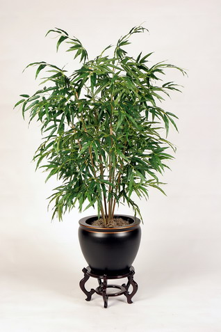 Indoor Palm Plants http://reztnrelax.blogspot.com/2012/07/plants-vs-air-pollutants.html