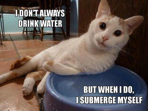 Funny Cat Drinking Meme : I don t always drink water funny cat pictures