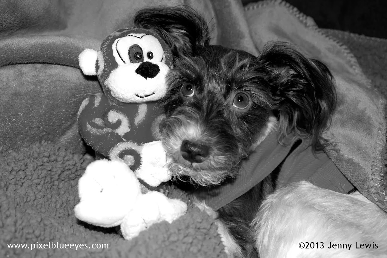 Black & white photo of Pixel listening to Randolf the Red Eyed Monkey Toy tell her something