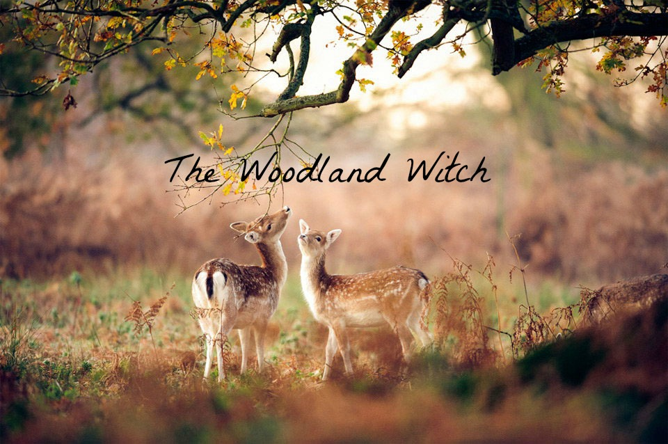The Woodland Witch