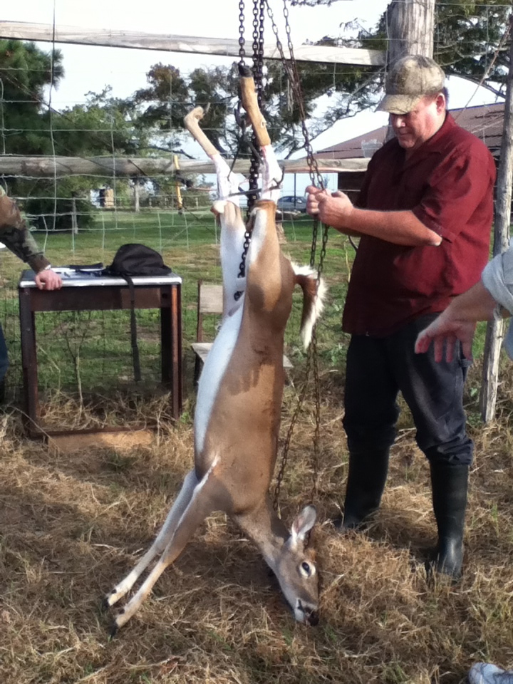 La acampada de las rayas canis de Bambi. | Un cowboy das Rías Baixas.