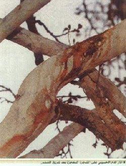 terpadat didunia ada di india syurgeon buah aneh carved
