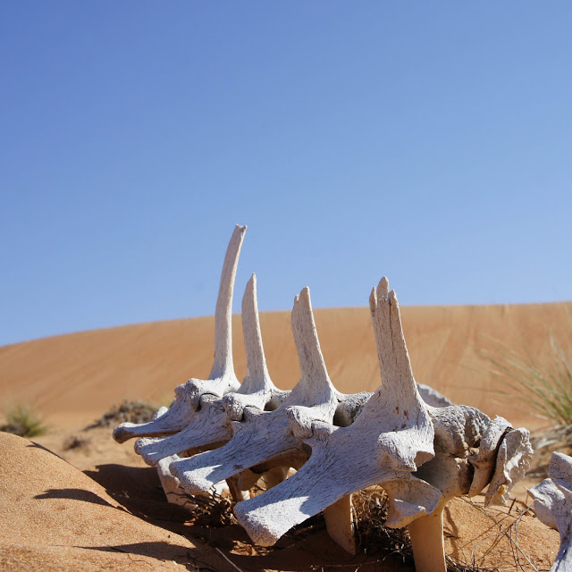 Kamel skelet i ørkensandet