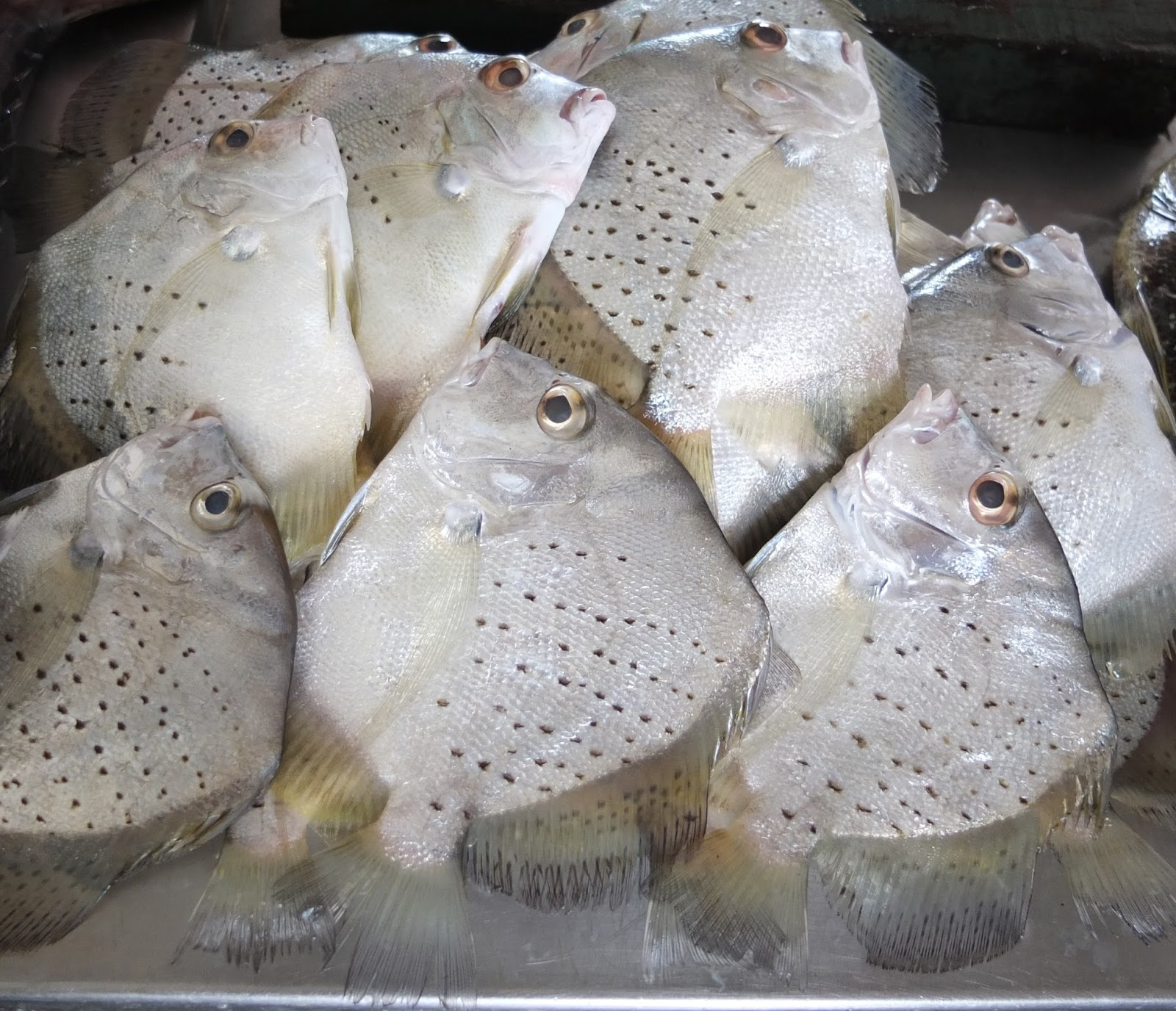 how to cook puffer fish