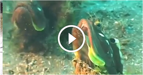 What type of fish is this watch and answer world of islam for What kind of fish do i have