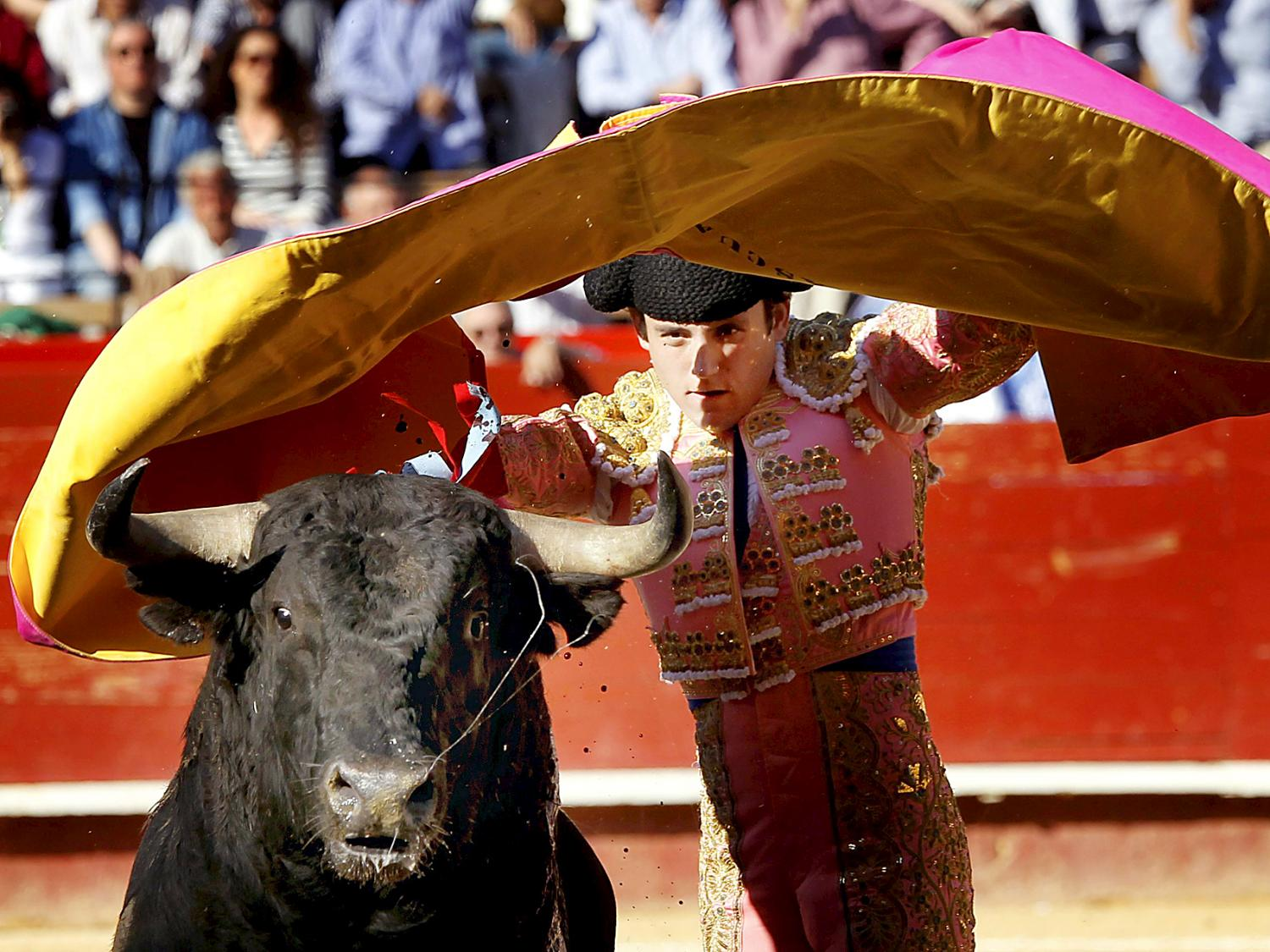 spanish style bullfighting Tico-style bullfights: some call it animal abuse, others a tradition clowns, and even spanish-style bullfighting.