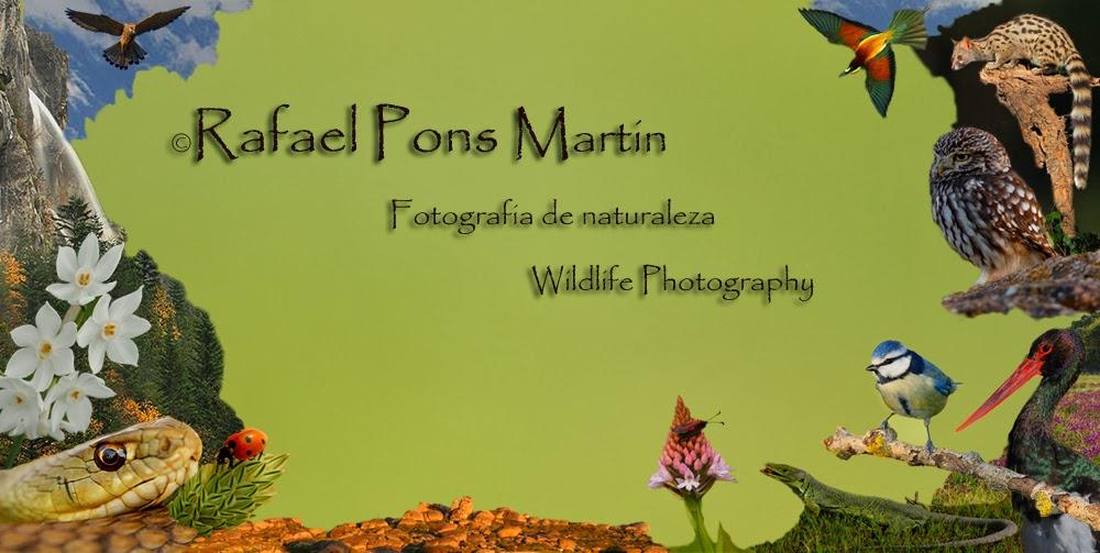 Rafael Pons Martin- Fotografia de Naturaleza