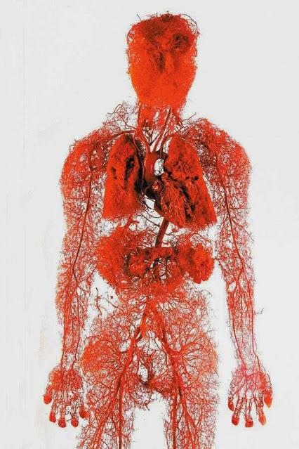 damar-anatomisi