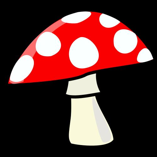 Los hongos sobre la placa de uña
