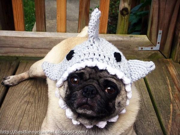 Dog in funny cap.