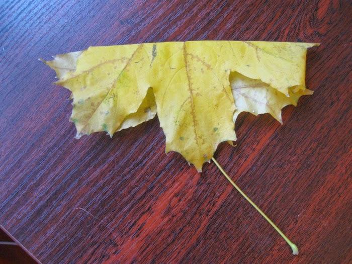 Розочки из кленовых листьев своими руками. Мастер-класс