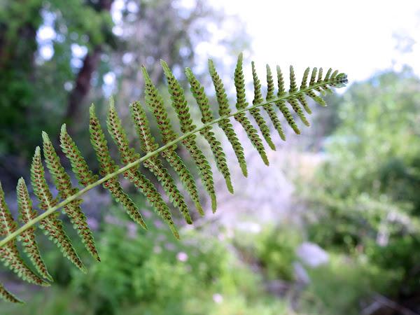 Seedless Vascular Plants, Nonvascular Plants & Nature Journaling
