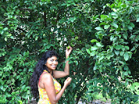Agroforestry Lemon Tree