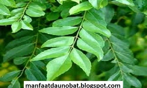 khasiat daun salam untuk kesehatan