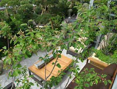 Contoh Taman Minimalis Jepang