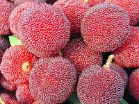 Yangmei Fruit Pictures