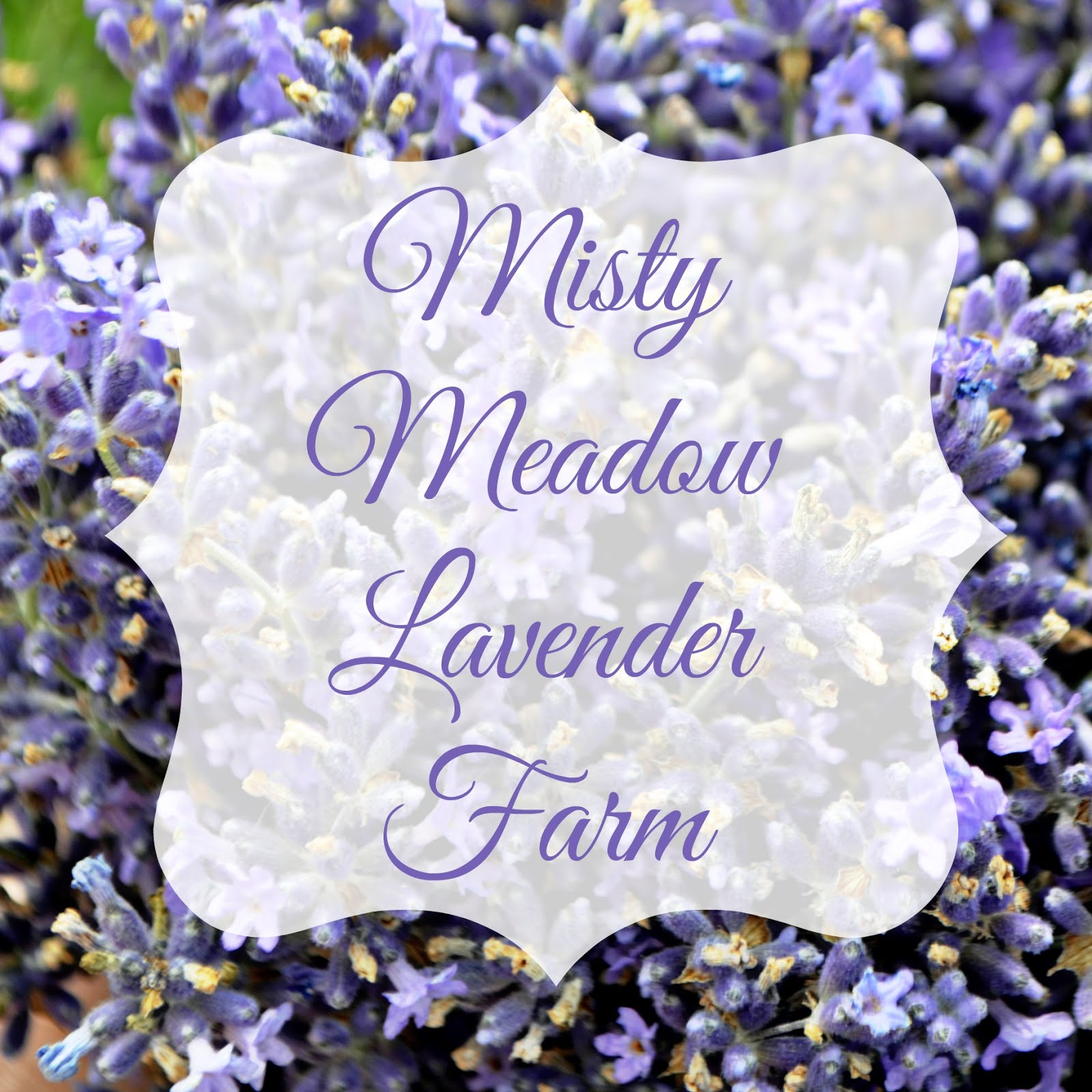 Misty Meadow Lavender Farm