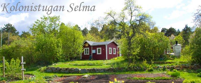 Kolonistugan Selma