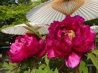 番傘を日除けにワインの花が・・・。