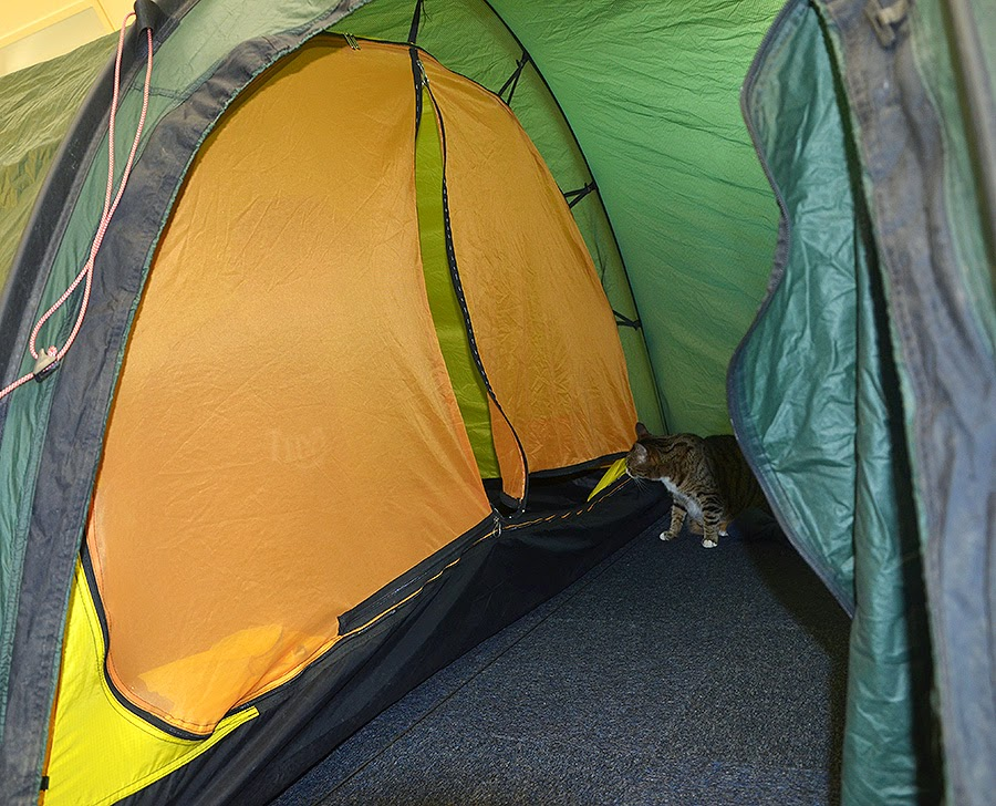Even with the zipper open there is less chance of mosquitos flying in... and thereu0027s that cat again! : tent zipper - memphite.com