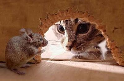 Cara Mudah dan Ampuh Mengusir Tikus Dalam Rumah