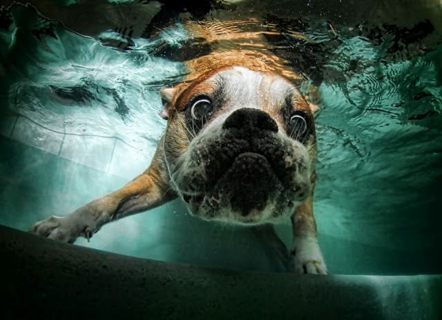 stunning underwater photographs of dogs