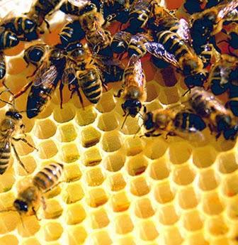 thu vi ve nhung chu ong