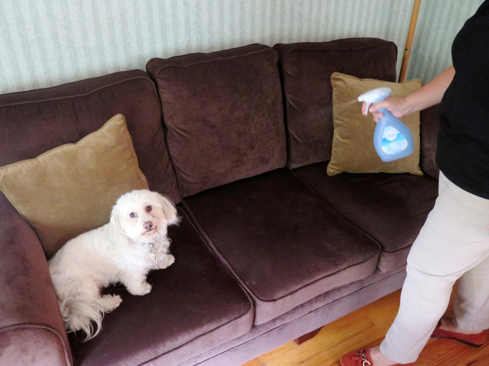 Can You Spray Febreeze On A Dog