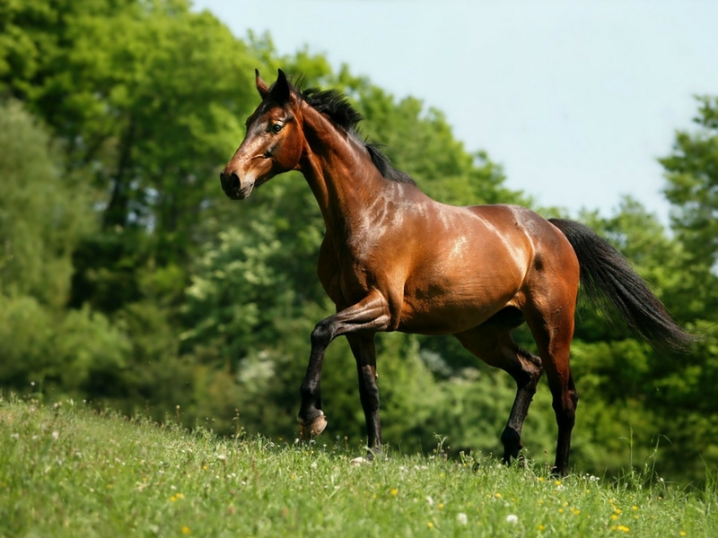 Wallpaper Gallery: Beautiful Horse Wallpaper - 4 - photo#2