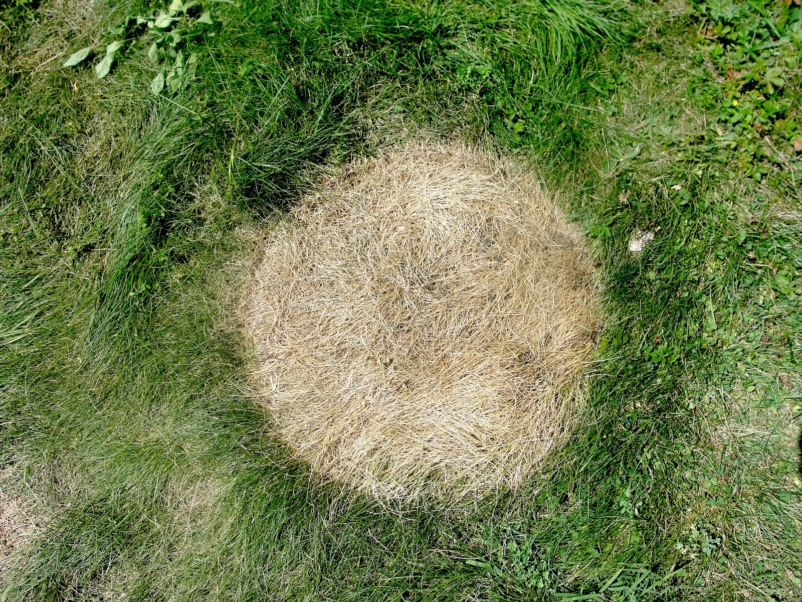 how to fix dead patches of grass