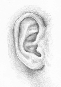 Drawing of an ear