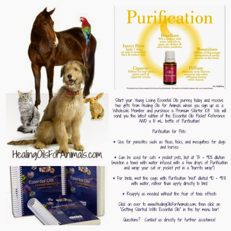 Healing Oils For Animals The Benefits Of Essential Oils