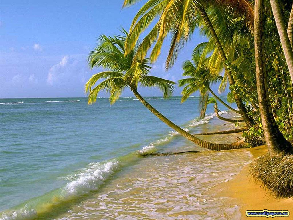 Ovimani nature for Fond ecran plage gratuit