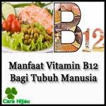 Manfaat Vitamin B12 Bagi Tubuh Manusia