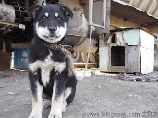 пес на стоянке