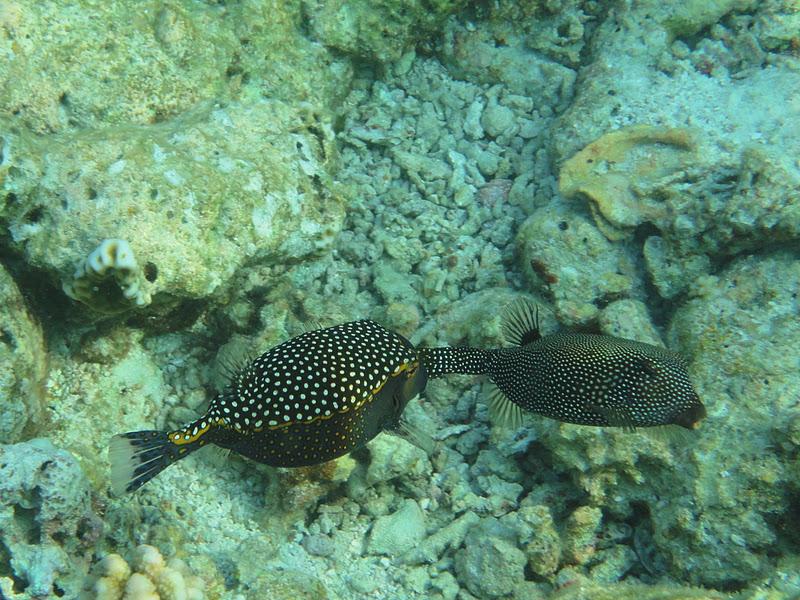 Salsapariglia pesci d 39 aprile - Pesci piu comuni in tavola ...