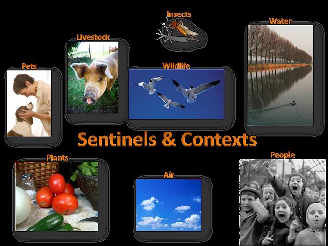 Sentinels & Contexts